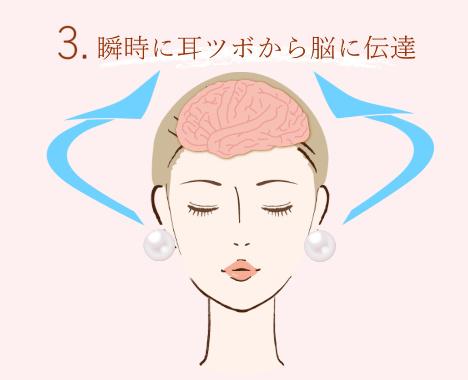 3瞬時に耳つぼから脳に情報伝達